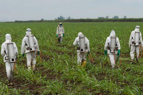 Individuals spraying dicamba on crops in hazmat suits